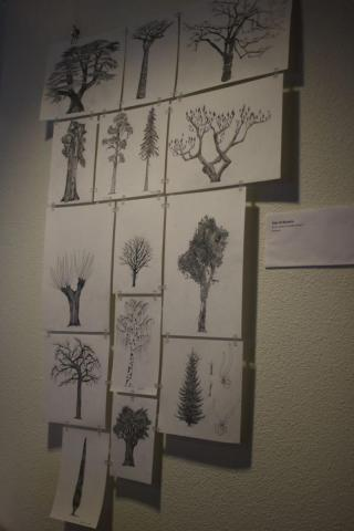Original tree drawings made by Saar De Buysere
